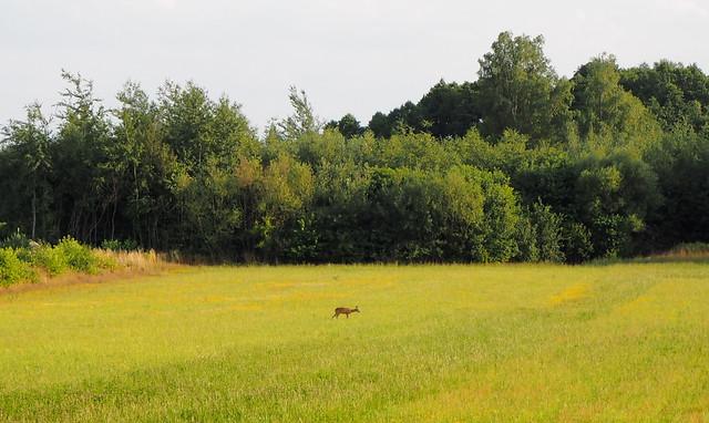 Забежовский лес
