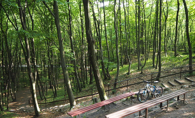 Тынецкий лес