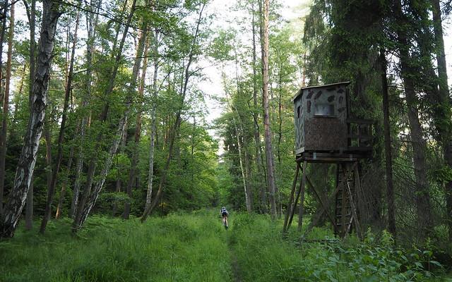 Лес Звежинец по маршруту ОрлихГнезд