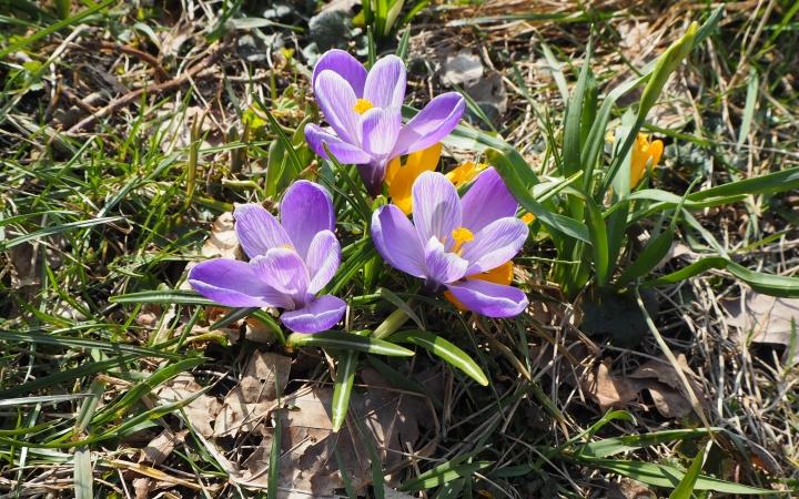 Подгурская весна